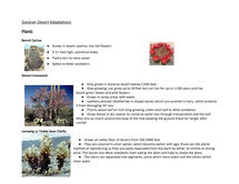Preview of Sonoran Case Study - adaptions