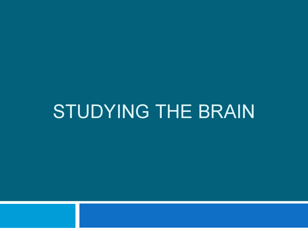 Preview of Studying The Brain