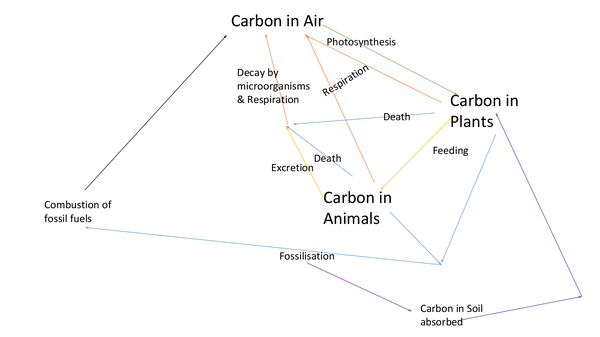 Preview of The Carbon/Nitrogen Cycle