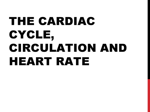 Preview of The Cardiac Cycle