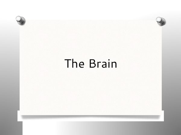 Preview of The Brain