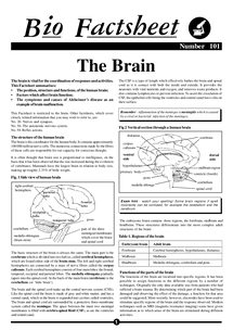Preview of The Brain Bio Factsheet