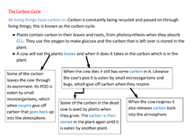 Preview of The Carbon Cycle