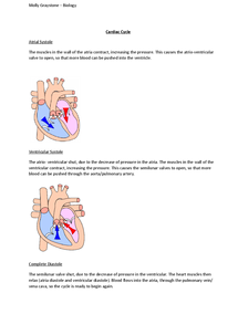 Preview of The Cardiac cycle AS Biology Edexcel Unit 1