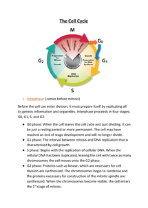 Preview of The cell cycle
