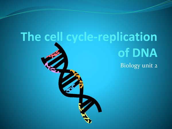 Preview of The cell cycle -replication of DNA AQA unit 2