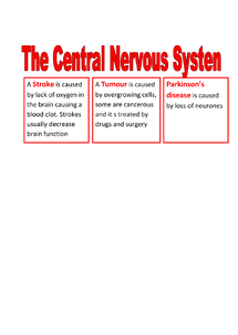 Preview of The Central Nervous System