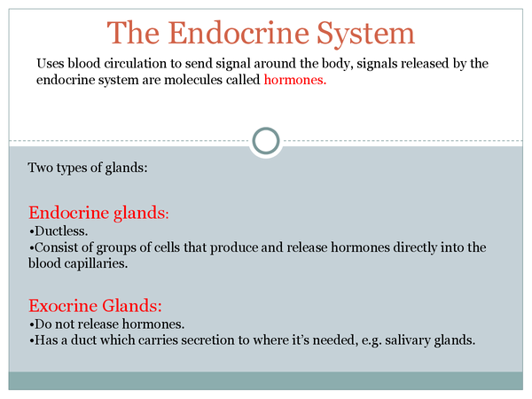 Preview of The Endocrine system