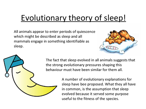 Preview of The evolutionary theory of sleep :)