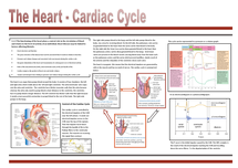 Preview of The Heart - Cardiac Cycle Poster