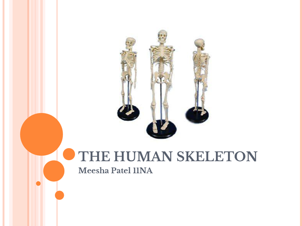Preview of The Human Skeleton