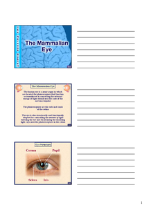 Preview of The mammalian eye powerpoint