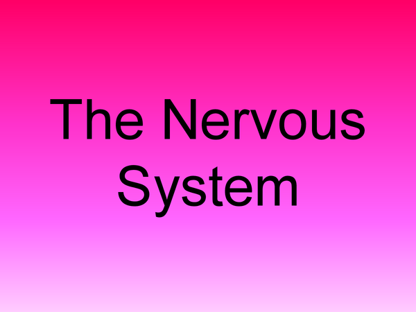 Preview of The Nervous System