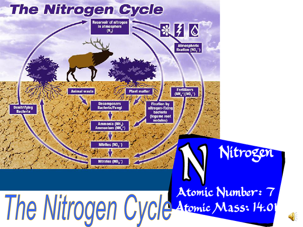 Preview of The Nitrogen Cycle