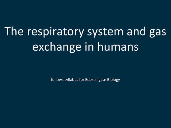 Preview of The repiratory system and gas exchange in humans