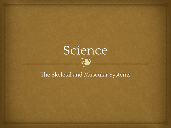 Preview of The Skeletal and Muscular Systems