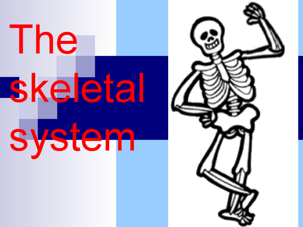Preview of The skeleton system