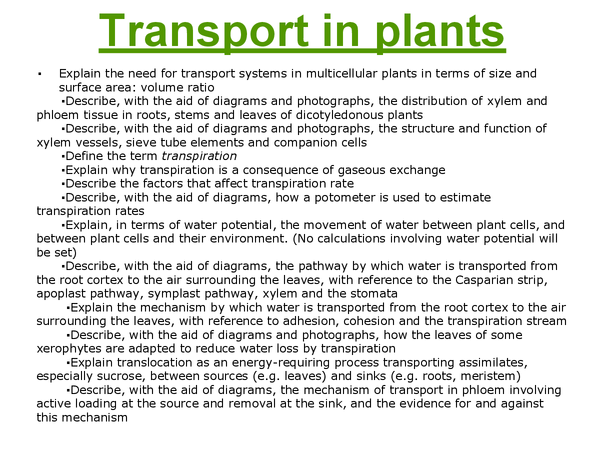 Preview of Transport in plants flashcards F211