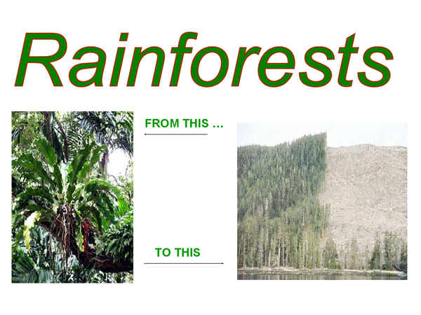 Preview of Tropical rainforest