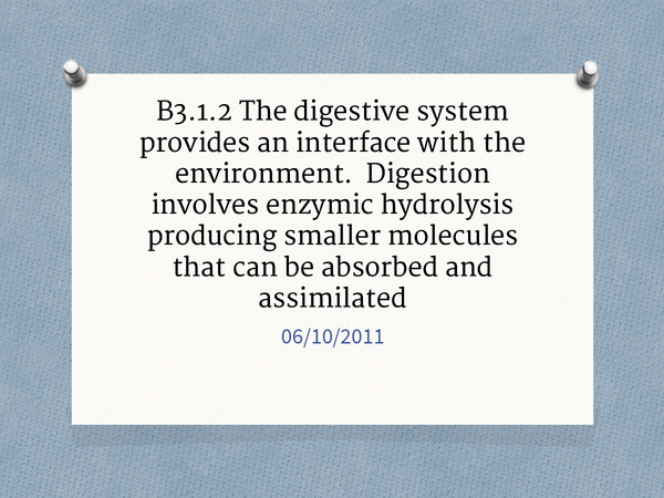 Preview of Unit 1: Chapter 2: Enzymes and the Digestive System