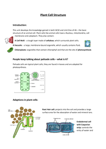 Preview of Unit 2 AQA Biology - Plant cell structure