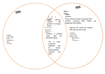 Preview of What is the difference between RNA and DNA?