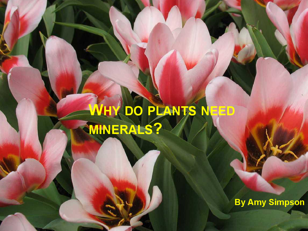 Preview of why do plants need minerals