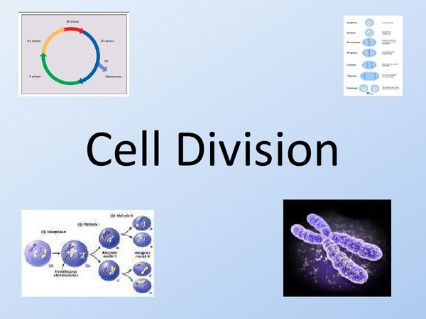 Preview of wish those cells would find a simpler way to divide.....