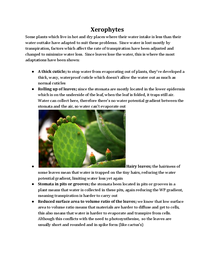 Preview of Xerophytes